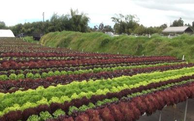 Know Your Farmers:  Waipoli Hydroponic Greens