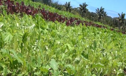 Organic & Earth-Friendly at Aloha 'Āina Farms